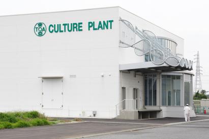 CULTURE PLANT